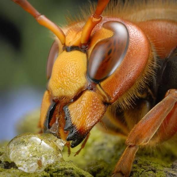 Macrofotografia mostra pequenos monstros vivendo entres 19