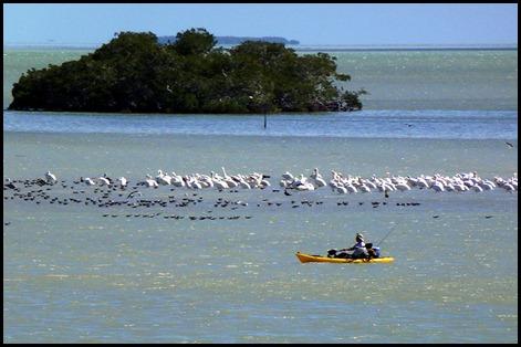 05d - walk to visitor center - Kayak Fisherman in Florida Bay