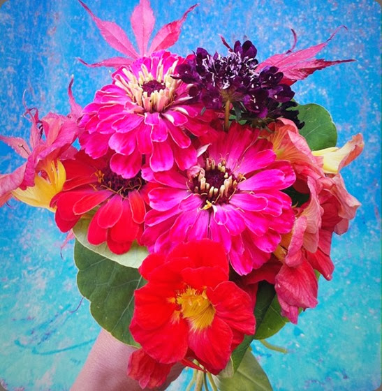 zinnia 308536_243332492458576_516914689_n  lindseymyra.com aka the liitle flower farm au