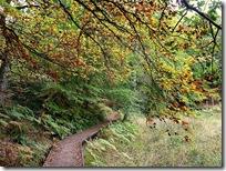 woodland track kincraig3