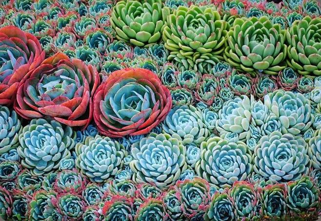succulents oasis plants 1619545_10153810587090580_918938634_n