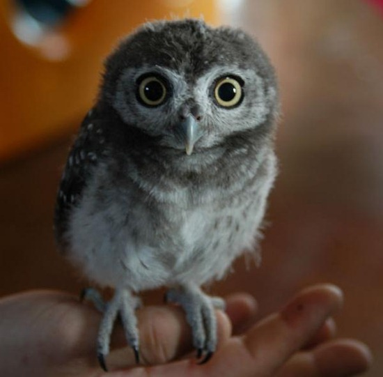 Owl8jpg.img_assist_custom-600x590