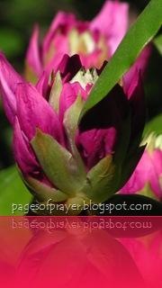2012 Tulip 5K-Aiden 173