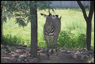 Zoo5 064