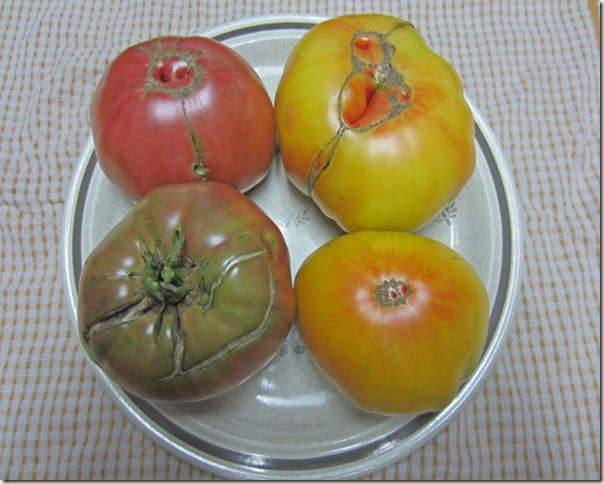 Cherokee Purple and Mr. Stripey tomatoes