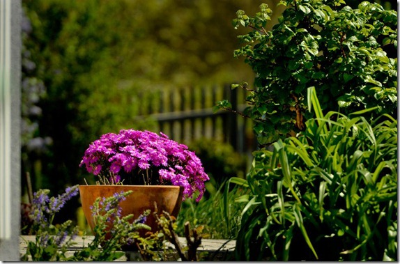 flores-facebook-tumblr-rosas-las flores-fotos de flores-779
