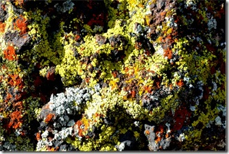 lichen