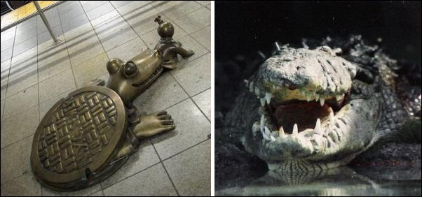 Alligators of the New York Sewers
