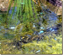 pupfish 6-4-2012 8-35-19 AM 2369x2073