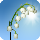 Lily of the Valley Wallpaper icon