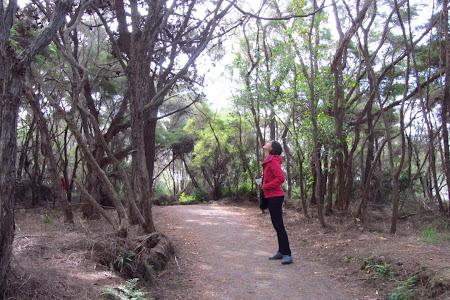 Imagini Insula de Nord: Rotorua, pe langa pomii fara sot