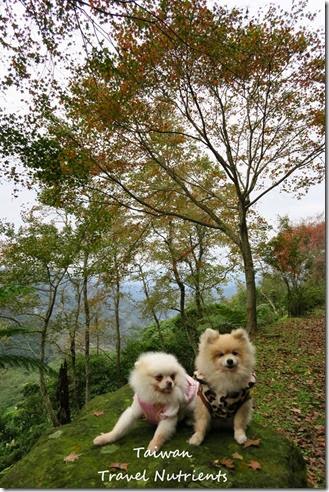 三峽熊空茶園 (45)