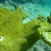 Buck Island Reef - IMGP2370.JPG