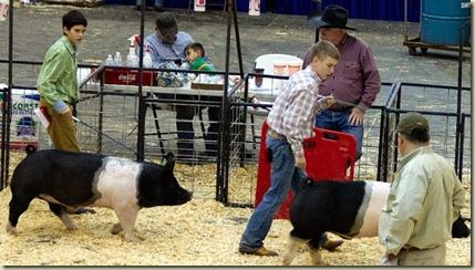 Jack showing pig, Jan. 2013