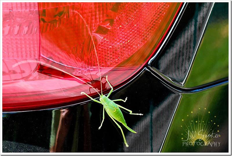grasshopper-6187