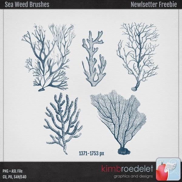 kb-NL_Seaweed
