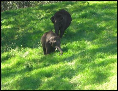 Munnar Wild Elephants