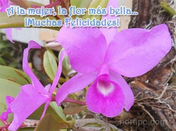 A la mujer, la flor más bella ¡Muchas Felicidades!
