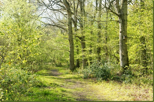 Foxley wood in spring