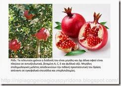 τα φρούτα του φθινοπώρου (10)