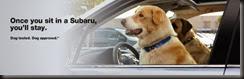 12070760-subaru-dog-tested-dog-approved