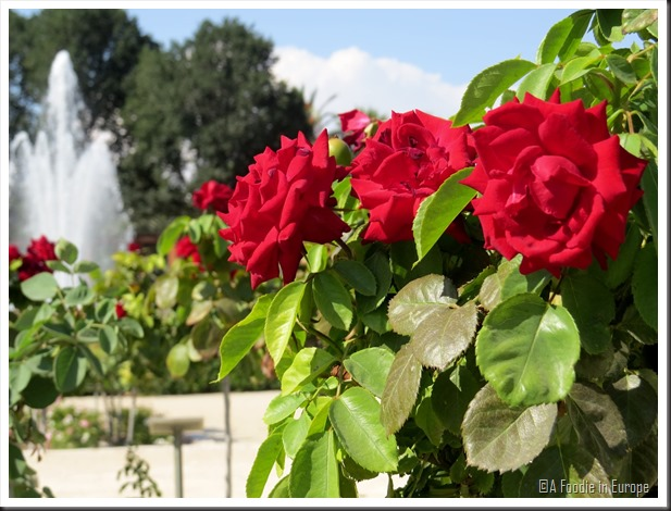 roses and fountain