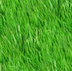 grass_seamless_pattern