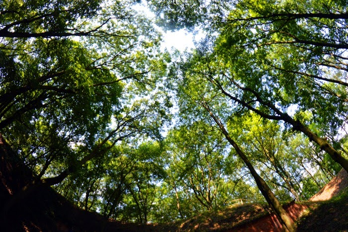 Gorgast treetops