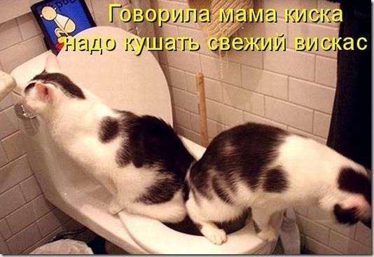 kotomatrix_02