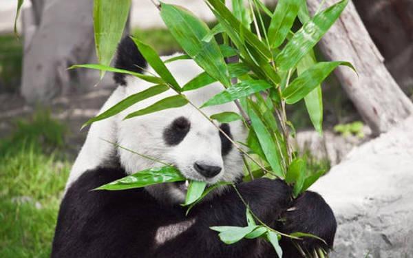 7- Pandas