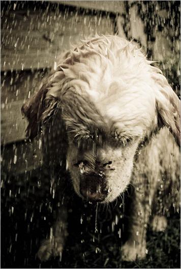 perro_bajo_la_lluvia