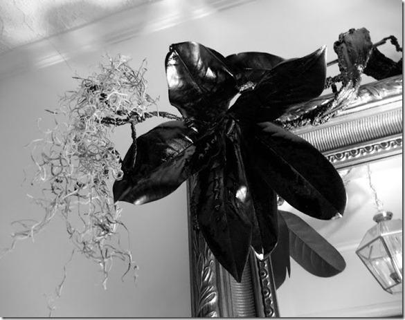 Black Magnolia Halloween 029