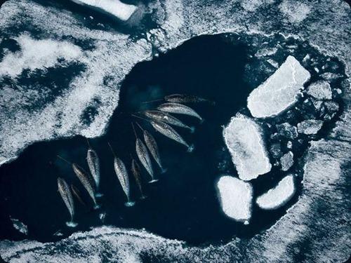 Polar Obsession11