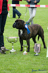 20100513-Bullmastiff-Clubmatch_31199.jpg