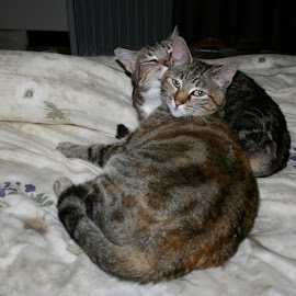 Friends by Mal Selby - Animals - Cats Portraits ( grooming, cats, friends, my pets, pets, tabby,  )