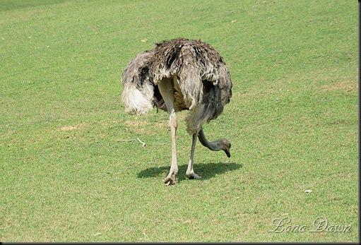 Safari_Emu3