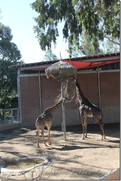 SanDiego2012 012