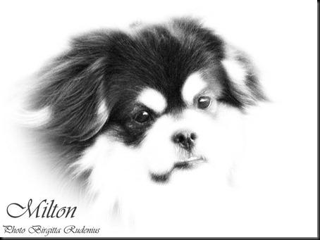 milton_20120305