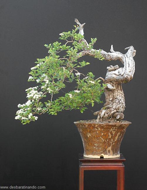 bonsais arvores em miniatura desbaratinando (24)
