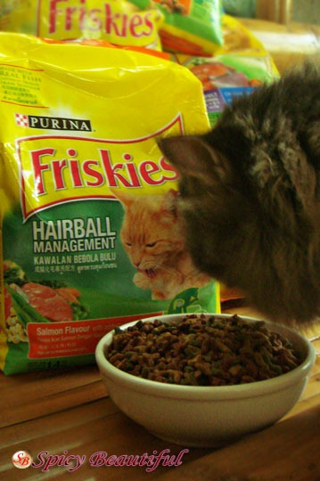Cat-Eating-Purina-Friskies-Hairball-Management