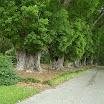 Orlando FL - Harry P. Leu Gardens