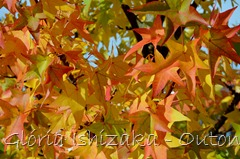 11 - Glória Ishizaka - Folhas de Outono