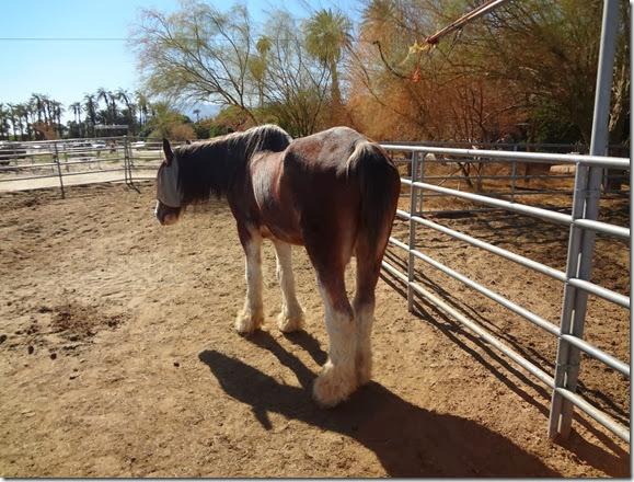 Epona Horse 023