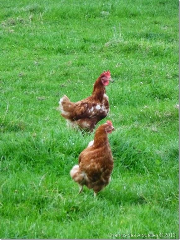 Champs des Alouettes: Chicken Eggs 2