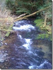Drift Creek