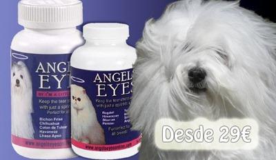 angels eyes tienda cuida tus mascotas