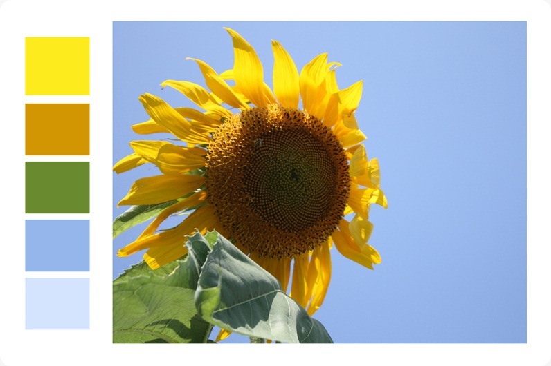 Sunflower_SurfaceDesign_edited-1