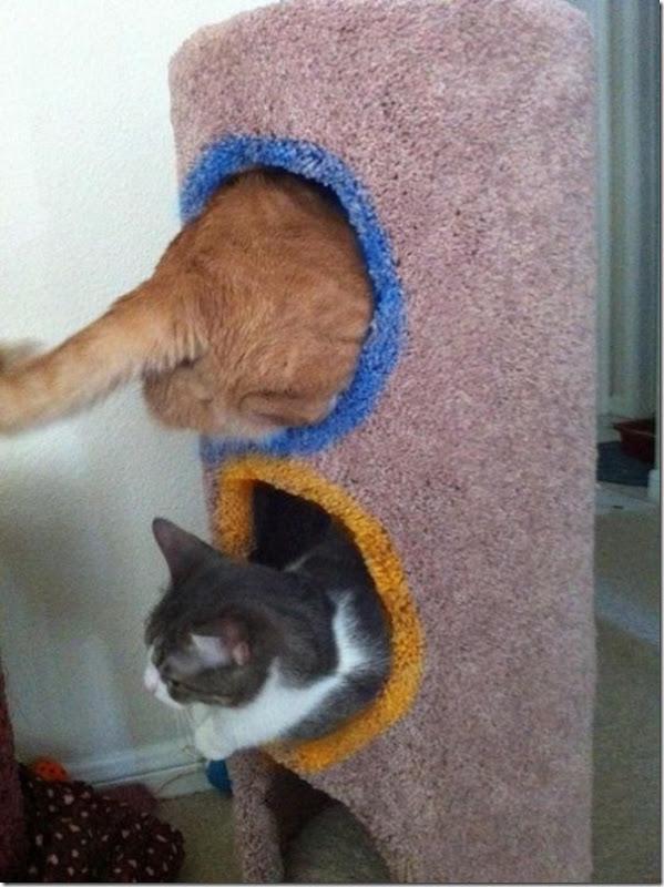 Portal Cat
