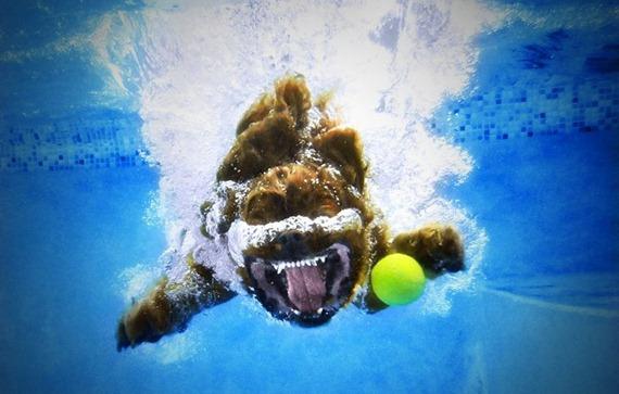 Underwater Dog  06