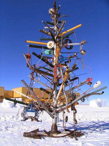 south pole tree